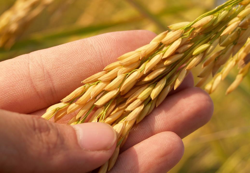 种子板块研报:种子正处于行业景气上行周期